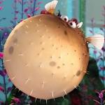 Nemo Bloatr